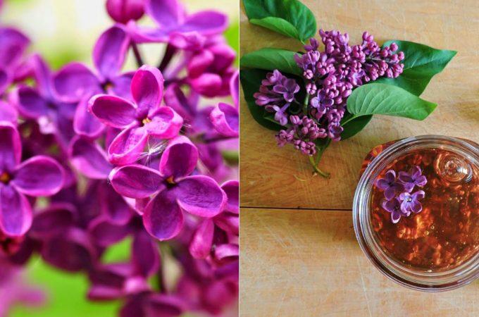 Farmacia florilor de vara